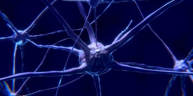 Neuroni specchio: cosa sono?